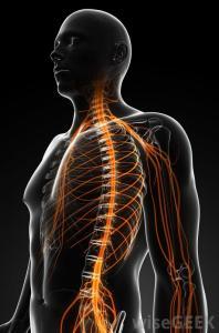 nerve-sytem